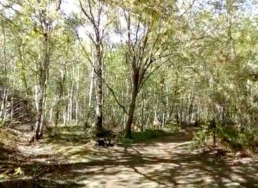 1 minute outside: Blean Woods