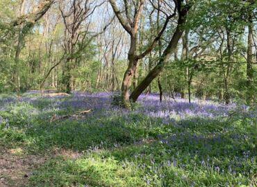 1 minute outside: Bluebell walk